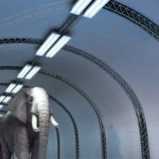 Elephants/Bobsleigh