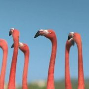 flamants/monocycle