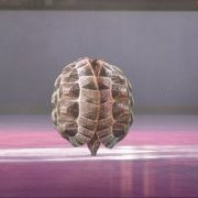 Tortue/Patinage